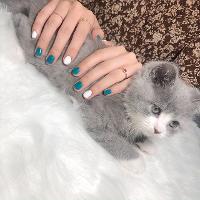 完美單色配上可愛小貓貓😍 -Nails by yen ——————————————— ▫️完全預約制🎀預約Line:haha8125 使用🇰🇷🇯🇵🇺🇸品牌凝膠  #凝膠指甲#新莊#光療凝膠#暈染#凝膠#手繪#Dollygel#新莊美甲#nails